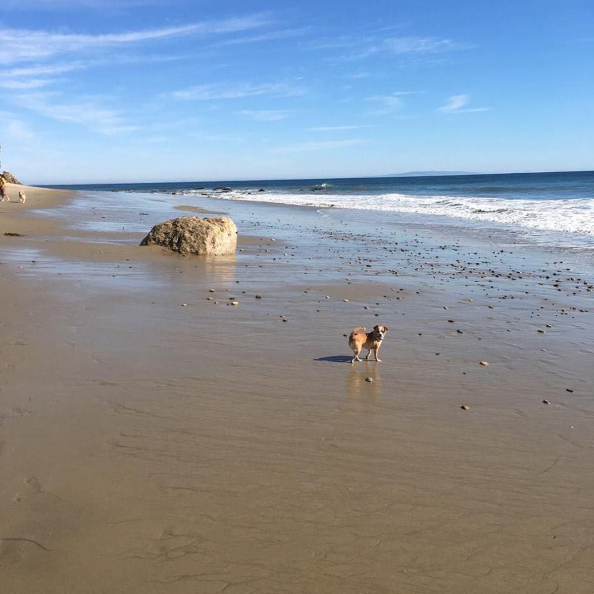 Beach Run Malibu