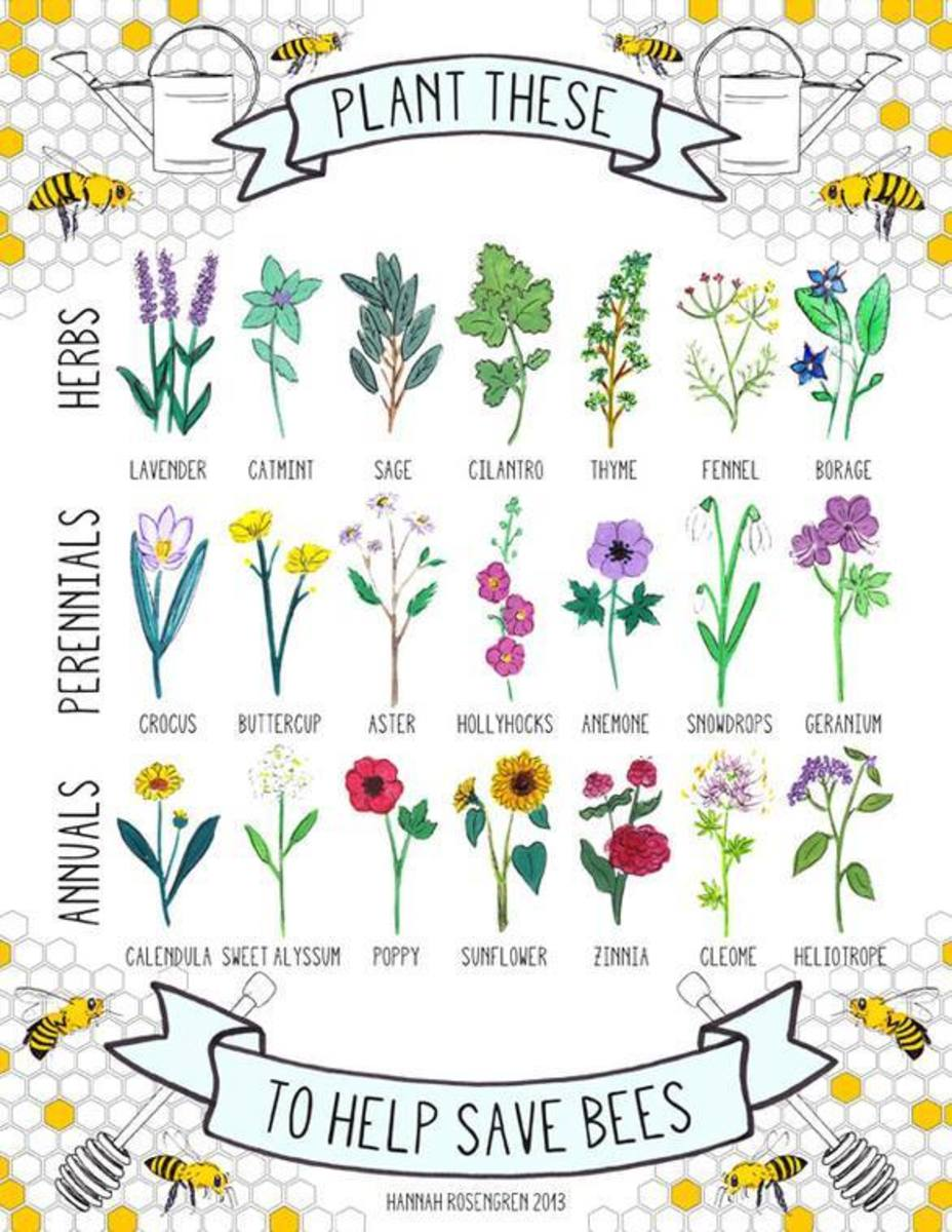 Plants for Bees Gardening
